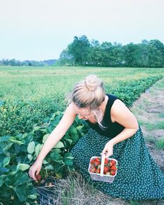 Organically grown strawberries from Green Door Gourmet in Nashville