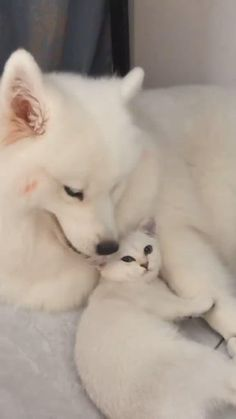 Cute Wild Animals, Cute Little Animals, Cute Funny Animals, Animals Beautiful, Animals Dog, Nature Animals, Beautiful Creatures, Cute Baby Dogs, Baby Cats