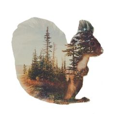 Squirrel with forest design