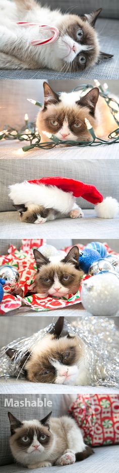Grumpy Cat is not very excited about the holidays.