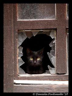 Black cat...