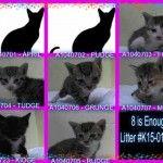 Super Urgents | NYC AC&C Urgent Cats