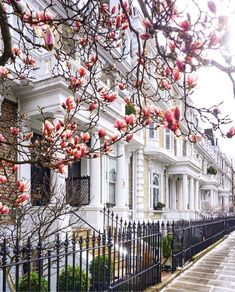 Magnolia season is upon us 🌸🌸🌸 Kensington And Chelsea, Kensington London, London Townhouse, England And Scotland, House Goals, London England, Pretty Pictures, Interior And Exterior, Places To See