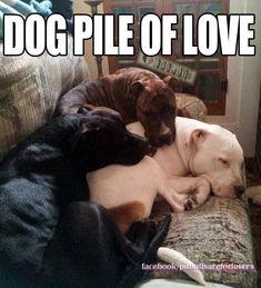 Dog pile of love