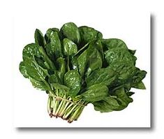 March 26 - Spinach Day