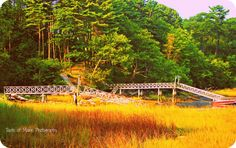 https://www.facebook.com/pages/Taste-Of-Maine-Photography-Yarmouth-Maine/331176420239918?ref=hl Yarmouth Maine