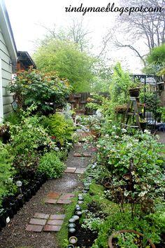 The Backyard:  4/14/16