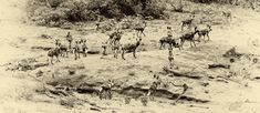 Wild Dogs from the Olifants High Level Bridge on the near Olifants Camp Kruger National Park, National Parks, African Wild Dog, Apex Predator, Wild Dogs, Hunting Dogs, Great Stories, Travel Photographer, High Level
