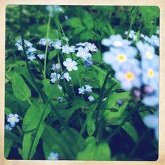 Helen Birch - blue, forget-me-not