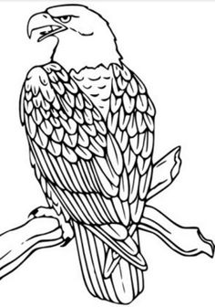 Eagle Adult Coloring Pages Unique Kartal Boyama Sayfaları Bird Coloring Pages, Printable Coloring Pages, Adult Coloring Pages, Coloring Sheets, Coloring Books, Free Coloring, Kids Coloring, Wood Burning Crafts, Wood Burning Patterns