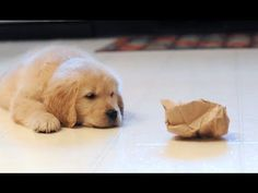 Watch This Dog Go Up Against A Paper Bag…While His Brother Hilariously Watches