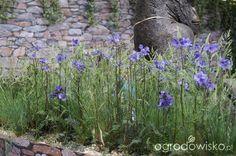 Ogród niby nowoczesny ale... - strona 1071 - Forum ogrodnicze - Ogrodowisko