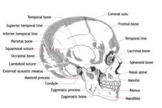 Detailed diagram of the human brain science and more labelled side view of the human skull ccuart Choice Image