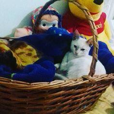 #catstagram #cats #cat#catsofinstagram #catsagram #catslove #instacat #instagood #instagram #instafollow #amazing #webstagram #forlike #tagsforlikes #gatinha #gata by entregatos