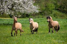 Horse Breeds, Horses, Animals, Animales, Animaux, Animal, Animais, Horse