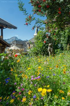 Summer blossoms in the heart of Châtel village, Portes du Soleil, Haute-Savoie, French Alps. Alpine Ski Resort, French Ski Resorts, French Summer, Mountain Village, French Alps, Chapelle, Blossoms, Touring, Skiing