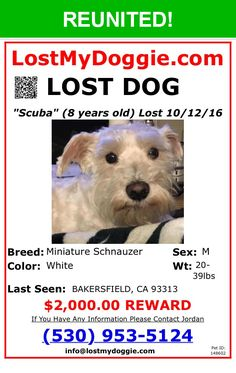 Great news! Happy to report that Scuba has been reunited and is now home safe and sound! :)
