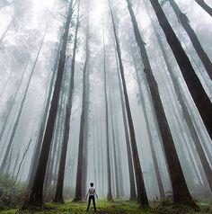 Forest Catedral, Yarra Valley, Mansfield, Victoria, Australia
