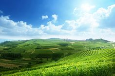 Barolo wine: discover it all about it!