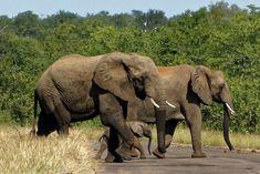 Deesdae is dit ons wonderlike voorreg om so dan en wan lang draaie in die Krugerwildtuin te gaan maak.