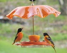 Weather Guards - Looks like a bowl would work for this