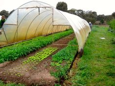 Why A Movable Greenhouse Is A Great Idea - LivingGreenAndFrugally.com