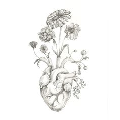 "8x10"" PRINT of original drawing ""Blooming Heart""- graphite, art,... ($20) ❤ liked on Polyvore featuring home, home decor, wall art, fillers, doodles, drawings, art, backgrounds, text and borders"