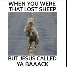 Image result for lost sheep jokes
