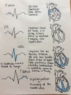 Electrical Events of the Cardiac Cycle, ECG and electrical activity of the heart - NCLEX Quiz Cardiac Cycle, Nursing School Notes, Nursing Schools, Medical School, Nursing School Humor, Cardiac Nursing, Pharmacology Nursing, Ob Nursing, Pathophysiology Nursing