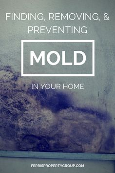 Indoor Mold: Tips for Finding, Removing, and Preventing Mold in Your Home