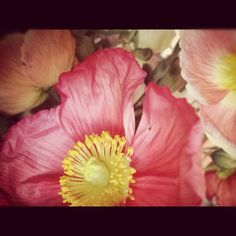 Poppies... #the naturalist #flower #naturalist