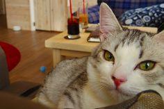 <メディア初登場>10分200円からのモフモフ体験/浅草で見つけたおしゃれな猫カフェ「MONTA」で美猫軍団と遊んできました
