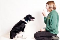 How to Teach a dog to Sit and Stay: Teaching A Dog To Sit ~ petsrank.com Dogs Inspiration
