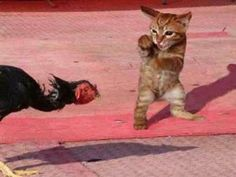 Angry Birds Vs. Kitty...  Forget pigs. The birds have a new, cuter enemy.