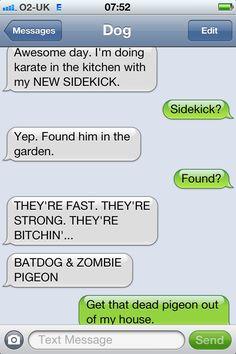 Zombie pigeon