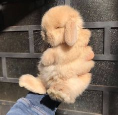 Things that make you go AWW! Like puppies, bunnies, babies, and so on. A place for really cute pictures and videos! Cute Baby Bunnies, Baby Animals Super Cute, Cute Little Animals, Cute Funny Animals, Cute Cats, Baby Animals Pictures, Cute Animal Pictures, Fluffy Animals, Animals And Pets