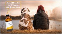 FullSpectrum CBD ÖL für Mensch und Hund Tier, Gelato, Vape, Wellness, Organic, Dog, Smoke, Ice Cream, Electronic Cigarette