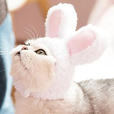 The Ultimate Retreat for Your Pets. Spoil All Your Pets with Our Daily Gifts! Up to 30% Off Pet Supplies Online Pet Supplies, Gifts For Pet Lovers, Cute Bunny, Camcorder, Cute Designs, Small Dogs, Your Pet, Great Gifts, Plush
