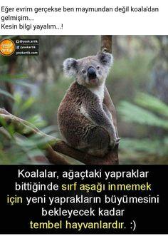 ✔katılıyorum ben maymun değil koala dan geliyorum