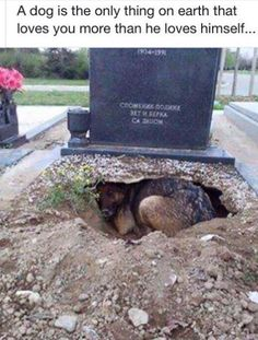 Heartbreaking! Please note: The title may not be a true account of this photo, but there's nothing like the love and loyalty of a dog!