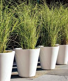 Create a kind of living fence by lining up tall potted grasses along a walkway or wide driveway.