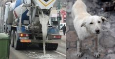 Dog cemented alive in concrete on the streets of Craiova, Romania! Demand Justice! | YouSignAnimals.org
