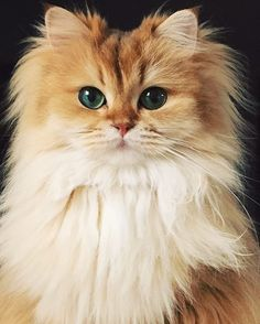 The 25 Cutest Cats to Follow on Social Media: Smoothie the Cat
