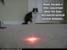 Mavis became a little concerned when the fleas discovered tactical nuclear weapons