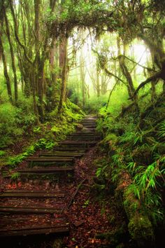 Hiking in the rainy forest by Hanson Mao on 500px
