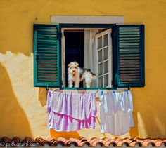 """""""(How Much Is) That Doggie in the Window?"""" is a popular novelty song published as having been written by Bob Merrill in 1952 and very loosely based on the folk tune, Carnival of Venice. The best-known version of the song was the original, recorded by Patti Page on December 18, 1952."""