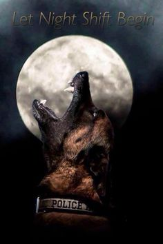 Let the Night Shift Begin-Woof ! Berger Malinois, Belgian Malinois Dog, Malinois Puppies, Police Wife Life, Cops Humor, Police Lives Matter, War Dogs, Schaefer, Police Dogs