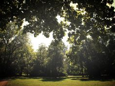 Leipzig #clarapark #lazysunday #sommerlicht #sommer #summer #unterwegs #thisisleipzig