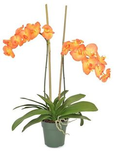 """30"""" Francis Phal Orchid Plant, Faux Now: $135.00  Was: $169.00"""