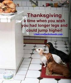 Thanksgiving, from Facebook